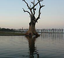 Dead tree from Teak Bridge, Myanmar 2012 by Intrepidjoan