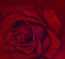 Red rose by Lynne Kells (earthangel)