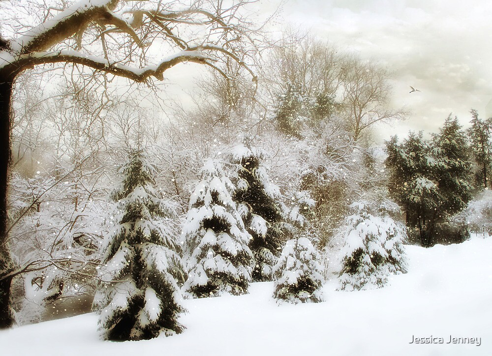 Snow Pines by Jessica Jenney