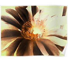 Textured Kaktus Flower. Poster