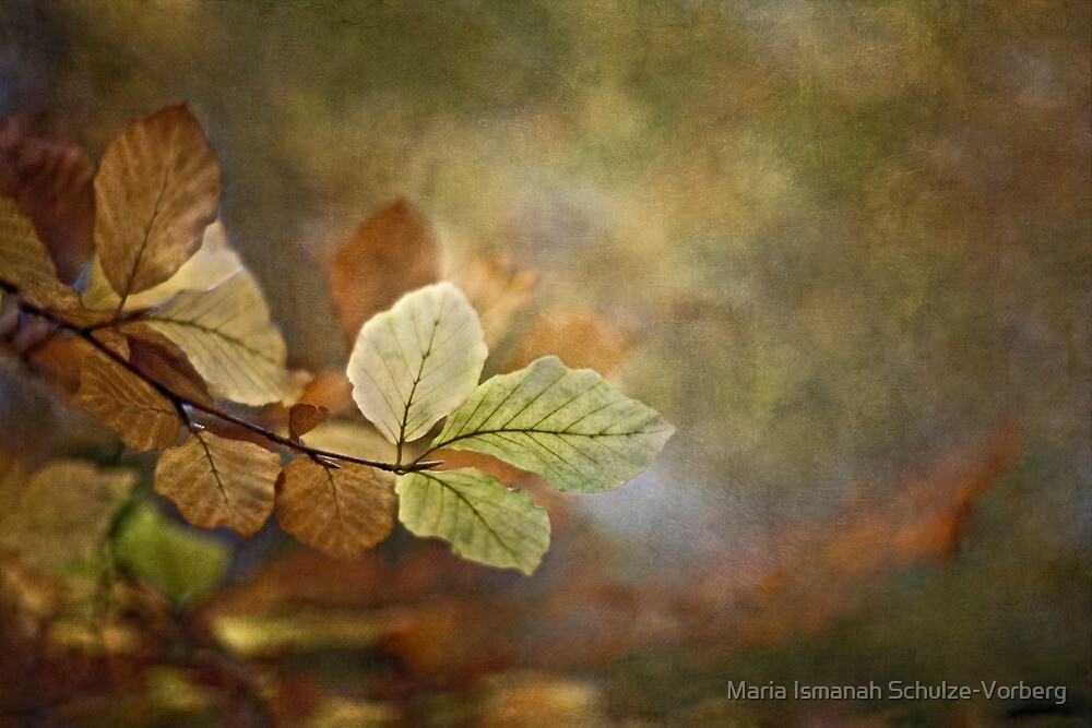 Beauty of the common by Maria Ismanah Schulze-Vorberg