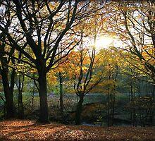 Autumn 3. by peanutcol