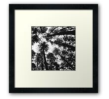 Asleep under the sways Framed Print