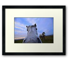 Dartmoor: 'Extreme Close Up' Framed Print