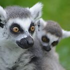 Lemur and Child by Kevin Shannon
