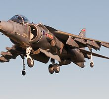 Harrier by David Ellins