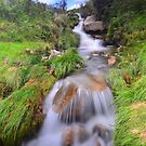 Dartmoor: Lud Brook by Rob Parsons