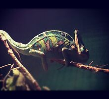 Chameleon by amiecampbell91
