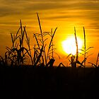 Sunset fields by Nishant Kuchekar