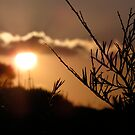 Sunset Branches by Michelle Ricketts