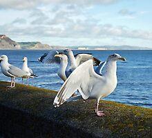 Airing The Wings by Susie Peek