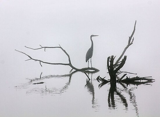 Early Morning by SuddenJim
