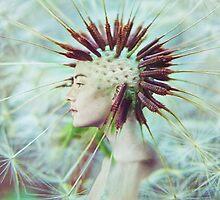 Dandelion by jamari  lior