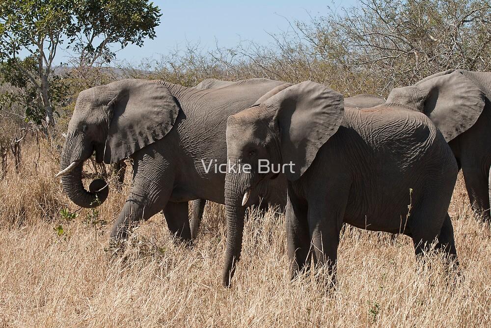 African Elephant  by Vickie Burt