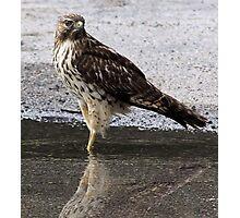 I, Am A Hawk Photographic Print