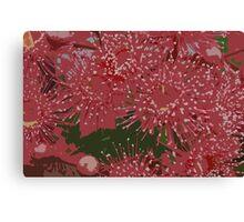 Gum blossoms Canvas Print