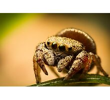 (Simaethula ZZ483) Jumping Spider Photographic Print