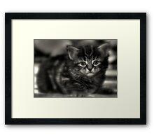 Cookie  Framed Print