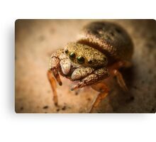 (Simaethula ZZ483) Jumping Spider #4 Canvas Print