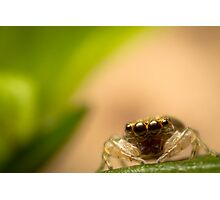 (Astia nodosa?) Jumping Spider Photographic Print