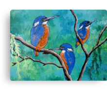 Above The Water Line ( Azure Kingfishers ) Canvas Print