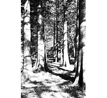 Trees in Ink Photographic Print