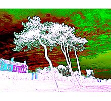 White Trees And Green Skies Photographic Print
