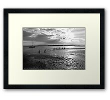 Pelicans on Low Tide Framed Print