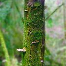 Miniature Forest Tree by Michelle Ricketts