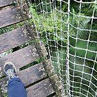 Canopy Shoe Cam by Deanne Chiu