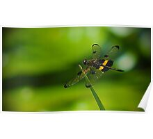 Dragonfly Macro Poster