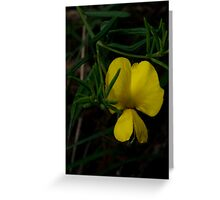 Common Wedge Pea Greeting Card