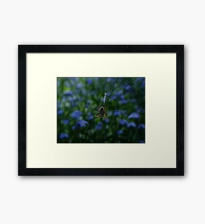 Harriot's Web Framed Print
