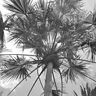 Palm Tree by tropicalsamuelv