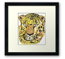 Blue-eyed leopard Framed Print