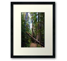 Fallen Tree in near Mount Rainier Framed Print