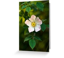 Wild Rose Flower Greeting Card