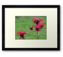 Red Flowers Framed Print