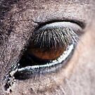 Eye.......window to horses soul by miroslava