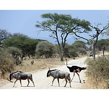 Wildlife crossing Photographic Print