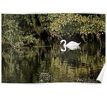 Ireland - Swan River Poster