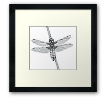 Broad Backed Chaser (cropped version) Framed Print