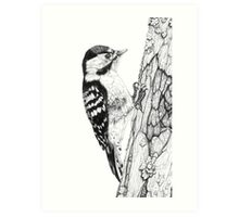 Greater Spotted Woodpecker (cropped version) Art Print