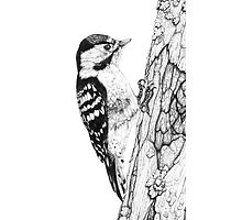 Greater Spotted Woodpecker (cropped version) Photographic Print