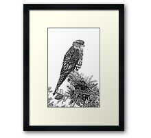 MERLIN (Bird of Prey) Framed Print