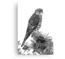 MERLIN (Bird of Prey) Canvas Print