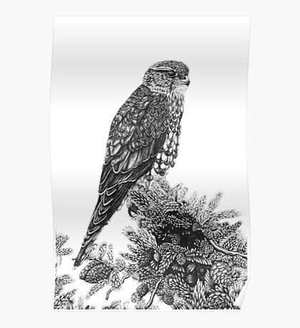 MERLIN (Bird of Prey) Poster