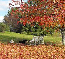 Les joies de l'automne by Bloodnok