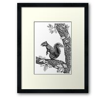 Mr Squirrel Framed Print