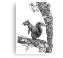 Mr Squirrel Canvas Print